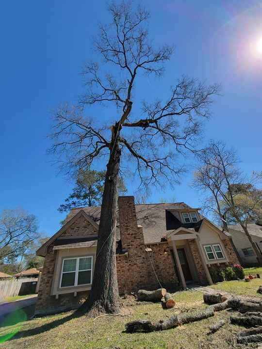 Photos from Hernandez Tree Service's post